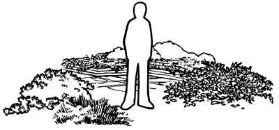drawing of a person standing in an area with a variety of ground covers