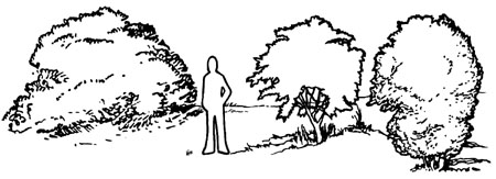 Drawing of person standing next to large, tree-like shrubs. The person is shorter than the plants.