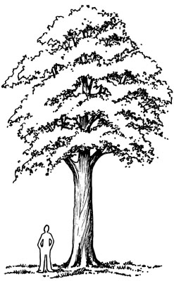 Drawing of person standing next to a tree that is sigficantly taller than him.