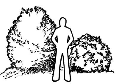 Drawing of person standing next to medium sized shrubs. One is slightly taller than the person, the other is less than shoulder height.