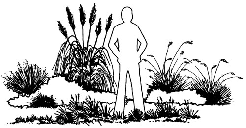 drawing of a person standing among a variety of ornamental grasses