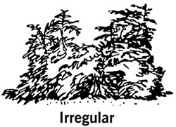 drawing showing the shape of an irregular shrub