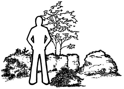 drawing of a person standing next so a variety of small shrubs. Most are shorter than the person