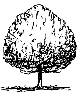 Illustration showing round tree shape