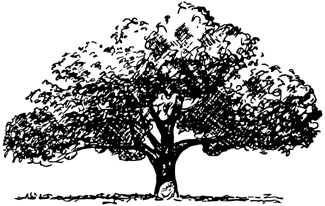 Illustration showing spreading tree shape