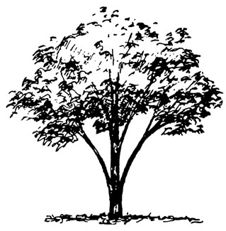 Illustration showing vase tree shape