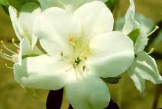 round petal flower petals