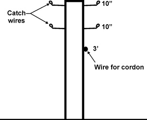 Detail for constructing the Single Wire Low Trellis with Catch Wires.