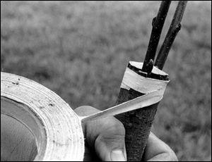 Tape graft