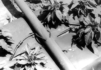 photo of manifold supplying drip irrigation tape under plastic mulch on bell peppers.