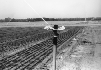 photo of permanent set sprinkler irrigation system.
