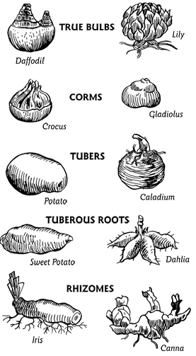 bulb types illustration