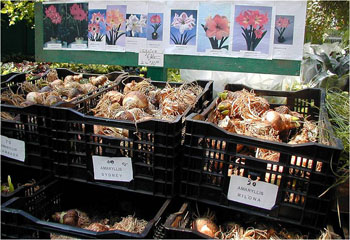 bulbs at a store