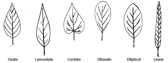 Figure 1. Common Leaf Shapes