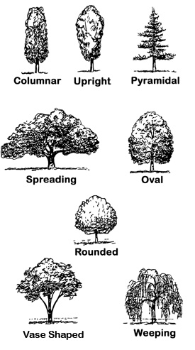 Drawings depicting tree shapes: Columnar, Upright, Pyramidal, Spreading, Oval, Orunded, Vase Shaped, and Weeping.