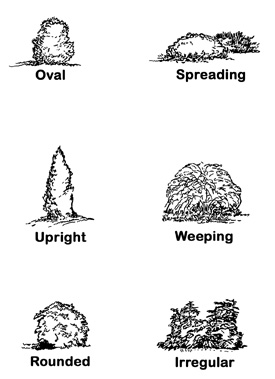 Drawings depicting shrub shapes: Oval, Spreading, Upright, Weeping, Rounded, and Irregular.