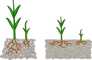 illustration showing difference between good and poor soil structure. The good structure has more space between soil particles.