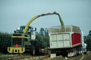 filling a grain truck