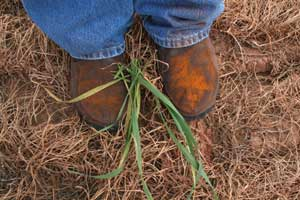 boots covered in rust spores
