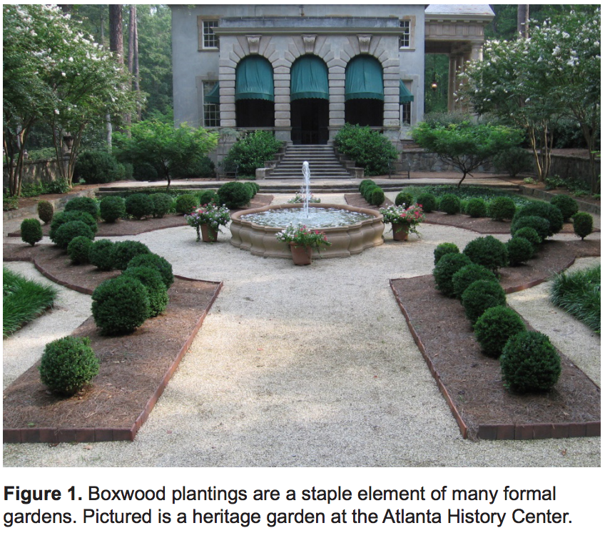 Think Outside the Boxwood: Alternative Plants for Gardens ... on diamond interior design, diamond landscape quilt, diamond art design, diamond flower design,