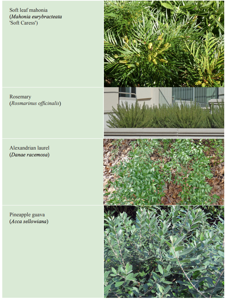 Think Outside the Boxwood: Alternative Plants for Gardens and ... on