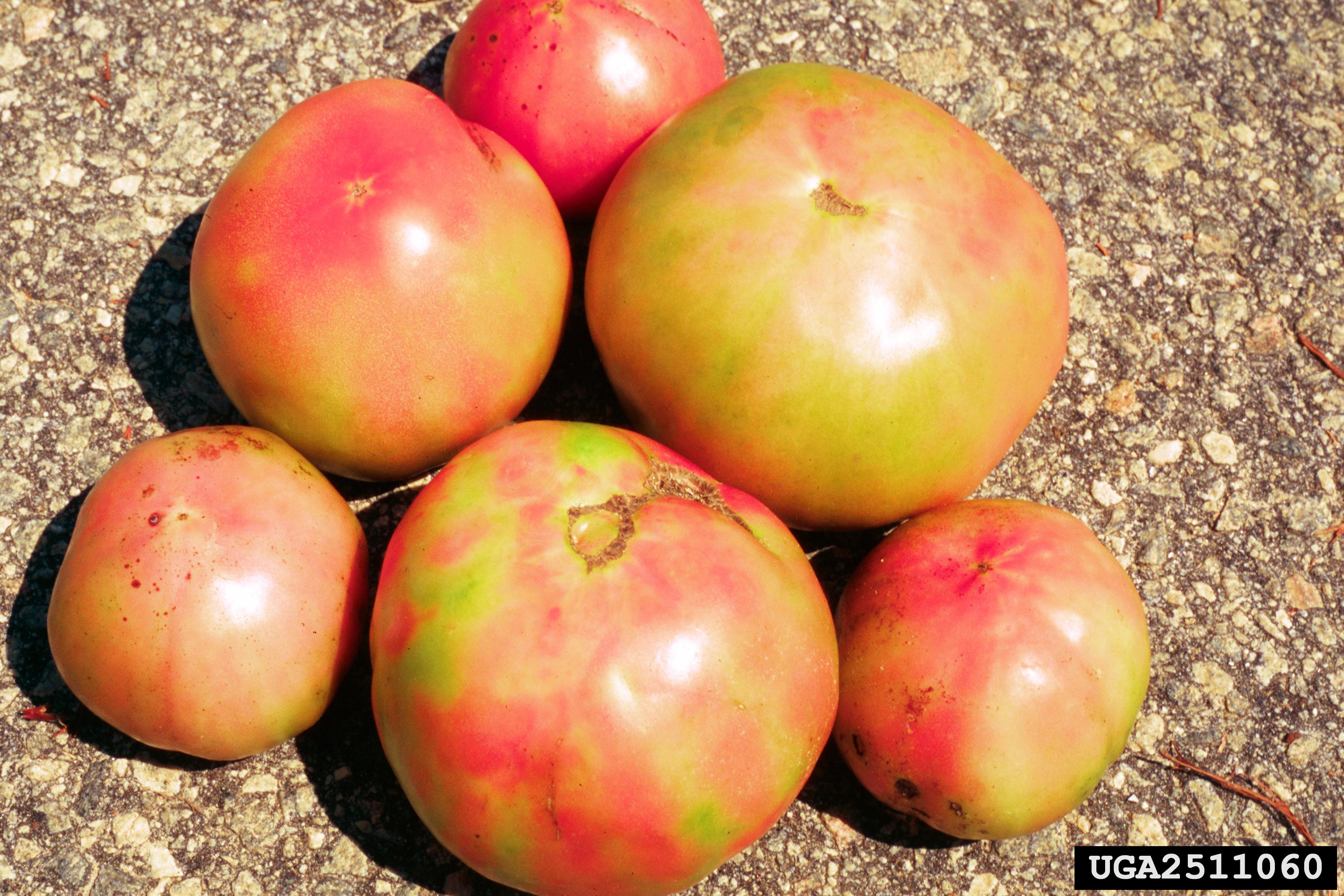 Damaged fruits