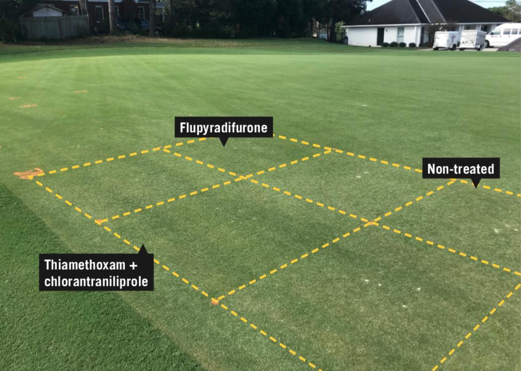 Bermudagrass plots