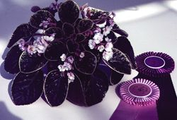 Award-winning plant