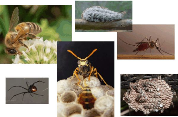 cover image showing a variety of stinging and biting pests
