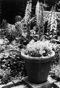 Figure 1. Container plants are ideal for decks, patios or balconies.