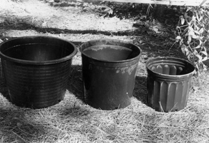 Figure 6. Nursery pots are ideally suited to container gardening.