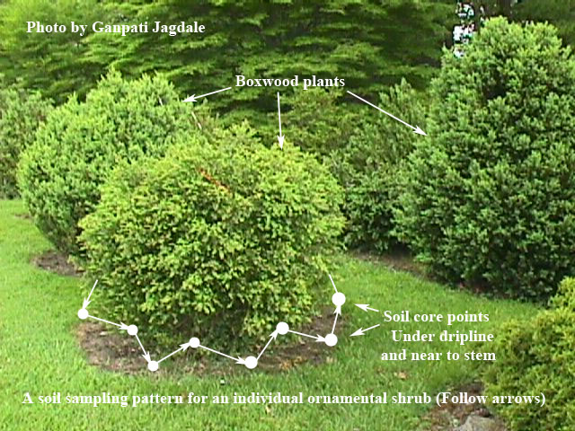Figure 5. Soil sampling pattern for an individual