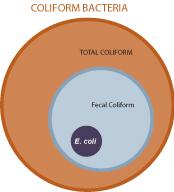 Figure 1. Interrelationship among total coliform, fecal coliform and E. coli.