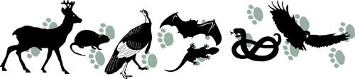 Natural History logo