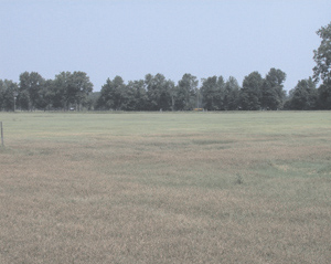"""Figure 1. Alicia bermudagrass infected with Helminthsporium in Lowndes County, Georgia. Infected areas appear """"bronzed"""" or red."""