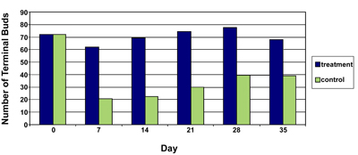Figure 1. Average number of Chrysanthemum terminal buds present in each plot at seven-day intervals at the Campus site on the Barry College campus during summer, 2004.