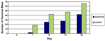 Figure 3. Average number of terminal bites (buds removed by deer) on Chrysanthemum observed at seven-day intervals on Berry College campus (Oak Hill Garden site) during summer, 2004.
