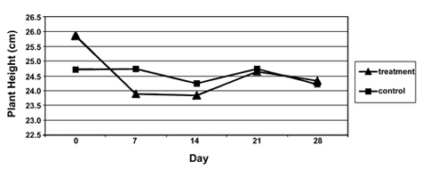 Figure 4. Average height (cm) of Chrysanthemum recorded at seven-day intervals at the Oak Hill Garden site on the Berry College campus, Mt. Berry, Ga., summer, 2004.