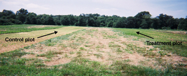 Figure 1. At each of five north Georgia properties, two 0.5-ac food plots (control on left and treatment on right) were established with 15-300 yards of natural vegetation separating the plots.