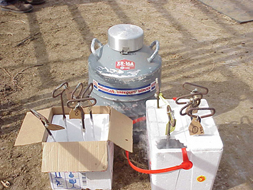 For freeze branding, you'll need liquid nitrogen and a container to hold the liquid nitrogen and branding irons while cooling