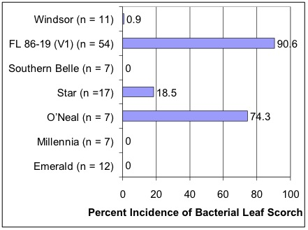 Bar chart showing percent incidence of bacterial leaf scorsch in 7 different varieties.