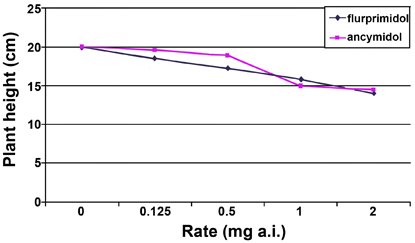 Figure 4. Growth of Iresine 'Curly' treated with flurprimidol or ancymidol.
