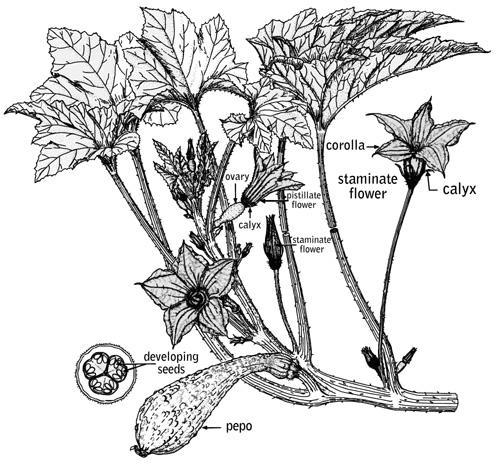 The pollination process