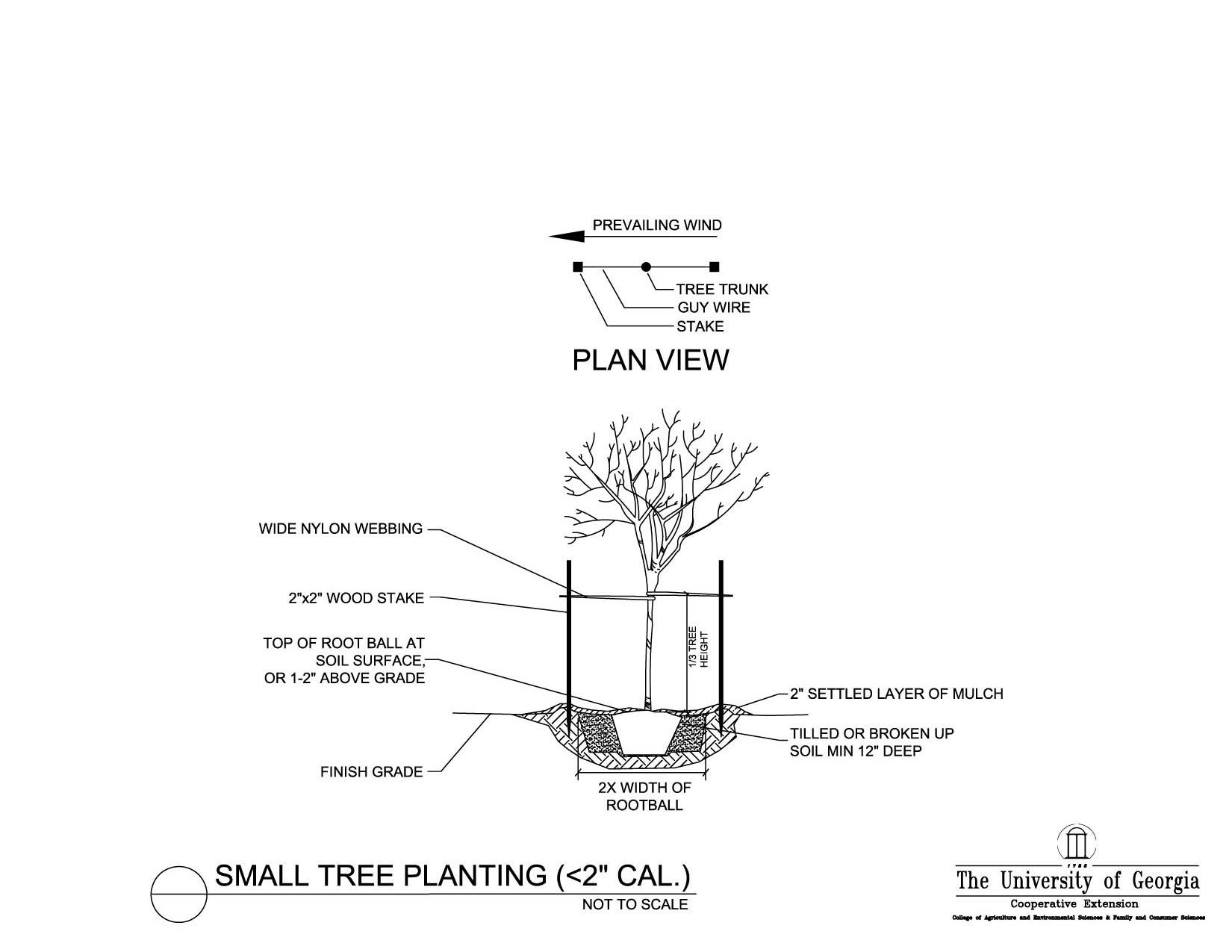 Plantation Floor Plan Tree Planting Details Uga Cooperative Extension