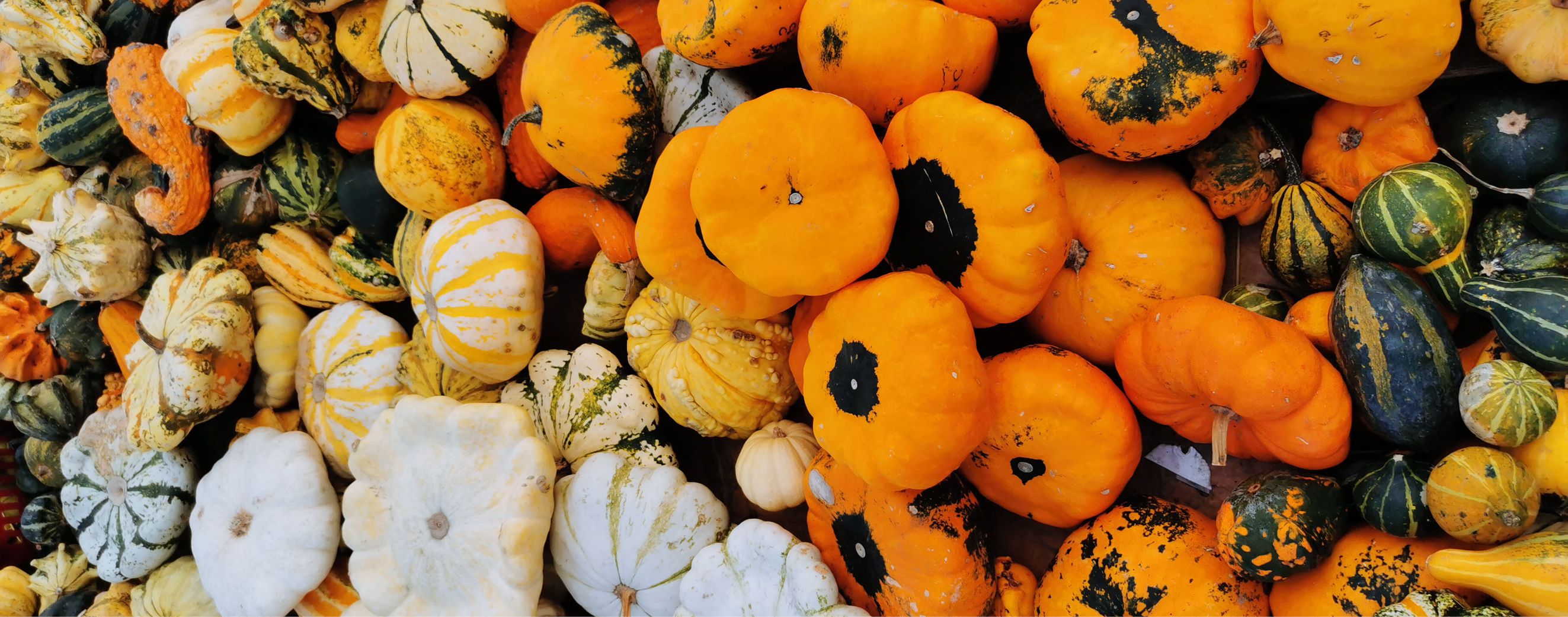 Commercial Production and Management of Pumpkins and Gourds