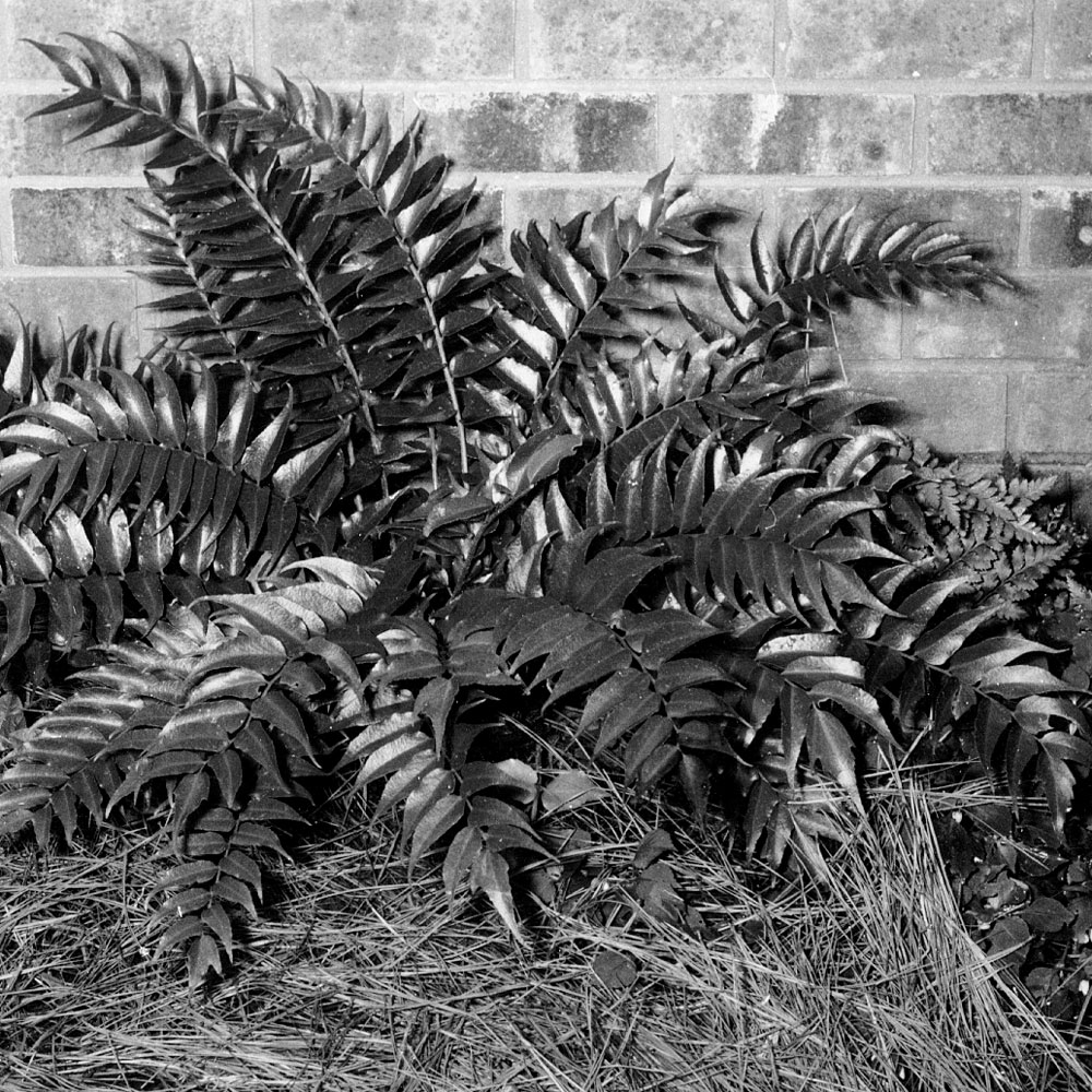 Growing Ferns cover image