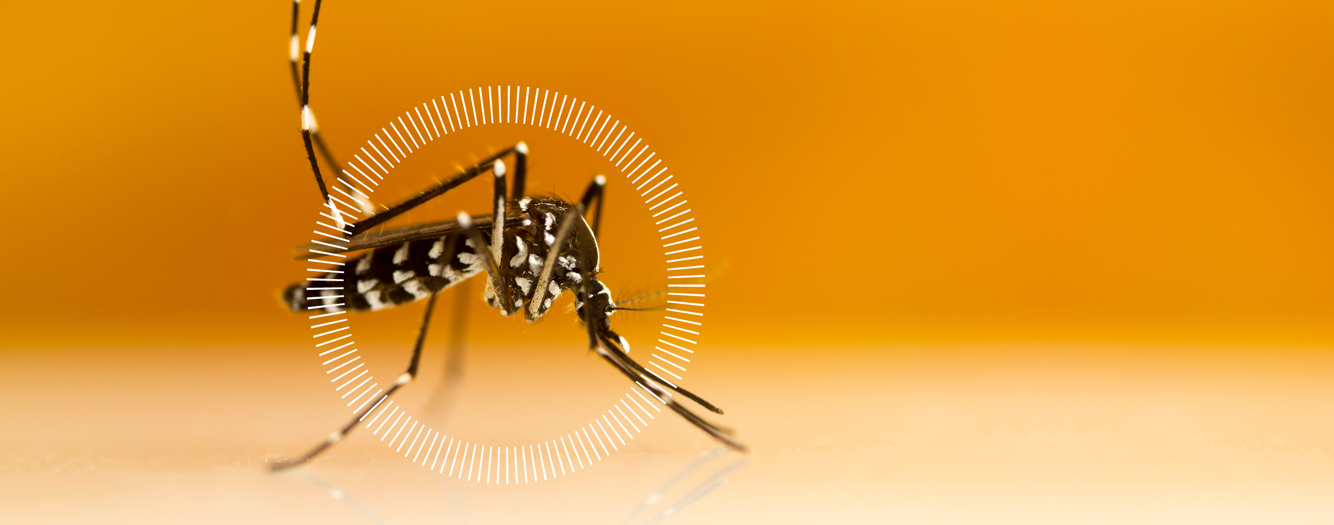 Mosquito Biology and Behavior