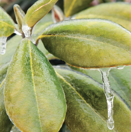 Effects of Low Temperature on Plants cover image