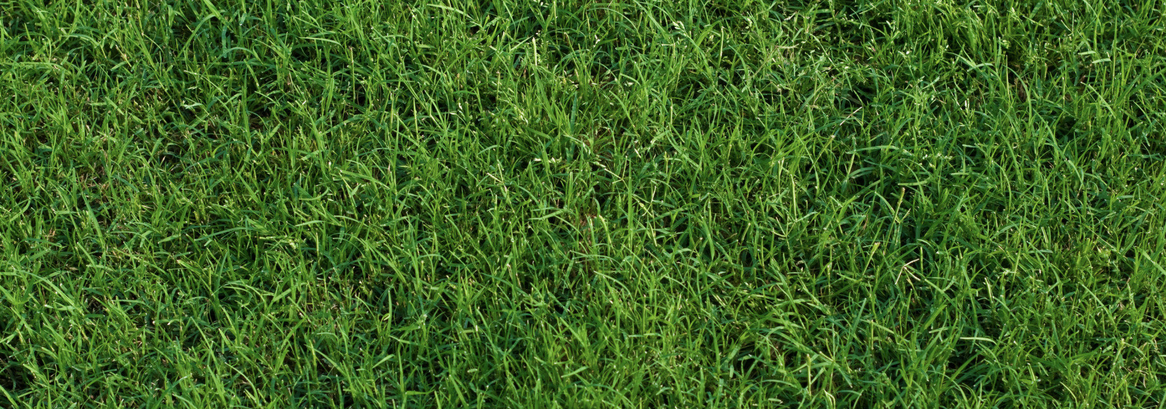 Lawns in Georgia: Selection and Species