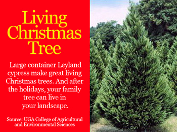 Living Christmas Tree